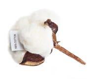 Flor de la planta de algodón Imágenes de archivo libres de regalías