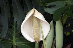 Flor de la planta de la ensalada de fruta fotos de archivo libres de regalías
