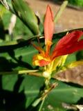 Flor de la playa de la primavera de la ave del paraíso del bebé en el sol 4k Fotos de archivo libres de regalías