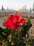 Flor de la playa Rímini Foto de archivo