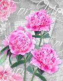 Flor de la postal La enhorabuena carda con las peonías hermosas en un fondo y un texto del grunge para usted Imagen de archivo libre de regalías