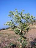 Flor de la pradera Fotos de archivo
