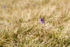 Flor de la primavera Foto de archivo