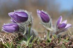 Flor de la primavera Fotografía de archivo libre de regalías