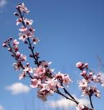 Flor de la primavera Imagenes de archivo