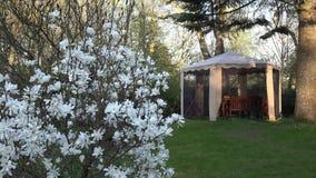 Flor de la primavera de la magnolia Glorieta con la red protectora en jardín 4K almacen de video