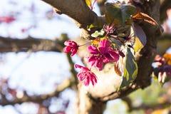 Flor de la primavera de un árbol Imagen de archivo