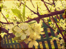 Flor de la primavera del Grunge foto de archivo