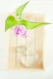 Flor de la primavera del tulipán sobre el rectángulo de madera Foto de archivo libre de regalías
