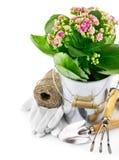 Flor de la primavera en compartimiento con el utensilio de jardinería y los guantes Imágenes de archivo libres de regalías