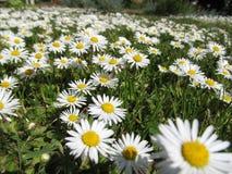 Flor de la primavera en el campo imagenes de archivo