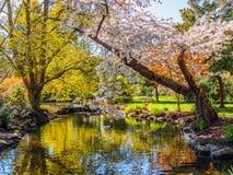 Flor de la primavera en el parque público de Beacon Hill, Victoria A.C. Canadá Imagenes de archivo