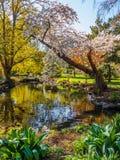 Flor de la primavera en el parque público de Beacon Hill, Victoria A.C. Canadá Fotos de archivo libres de regalías