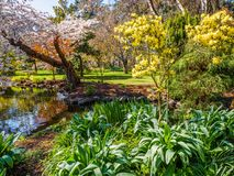 Flor de la primavera en el parque público de Beacon Hill, Victoria A.C. Canadá Imágenes de archivo libres de regalías