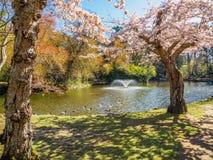 Flor de la primavera en el parque público de Beacon Hill, Victoria A.C. Canadá Foto de archivo libre de regalías