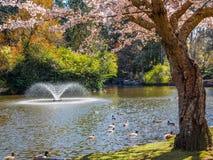 Flor de la primavera en el parque público de Beacon Hill, Victoria A.C. Canadá Fotos de archivo