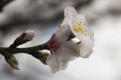Flor de la primavera en España Foto de archivo