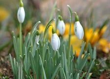 Flor de la primavera en jardín Fotografía de archivo libre de regalías