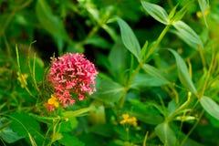 Flor de la primavera en la hierba Fotos de archivo libres de regalías
