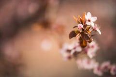 Flor de la primavera en parques de mi ciudad con fuera del fondo del foco fotografía de archivo