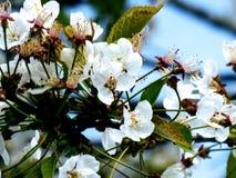 Flor de la primavera, flores foto de archivo