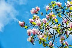 Flor de la primavera, naturaleza, belleza foto de archivo