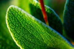 Flor de la primera planta de la mancha mediterránea en el salentina de la península con exposiciones largas al sol directo imagenes de archivo