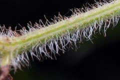 Flor de la raíz Foto de archivo
