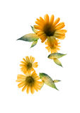 Flor de la radiografía Imágenes de archivo libres de regalías