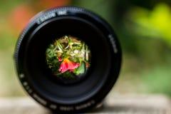 Flor de la reflexión en la lente de la cámara Imagen de archivo libre de regalías