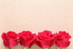 Flor de la rosa del rojo en la página del papel en blanco para creativo Foto de archivo
