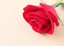 Flor de la rosa del rojo en la página del papel en blanco para creativo Fotos de archivo