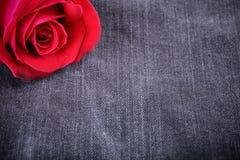 Flor de la rosa del rojo en textura negra de los vaqueros Imágenes de archivo libres de regalías
