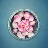 Flor de la rosa del rosa con el pétalo en cuenco azul con agua en fondo azul Imagen de archivo libre de regalías