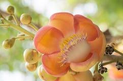 Flor de la sal Fotografía de archivo libre de regalías