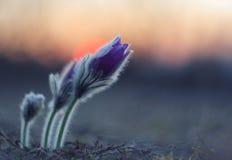 Flor de la salida del sol Foto de archivo
