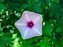 Flor de la selva Imagenes de archivo