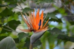 Flor de la selva tropical Imagen de archivo libre de regalías