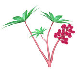 Flor de la semilla de ricino Imagenes de archivo