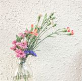 Flor de la tarde Imagen de archivo libre de regalías