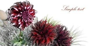 Flor de la tarjeta Imagen de archivo libre de regalías