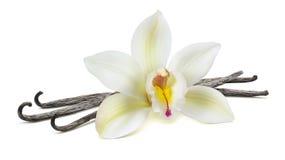 Flor de la vainilla en el centro en las habas aisladas foto de archivo
