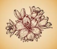 Flor de la vendimia Lirio retro dibujado mano del bosquejo Ilustración del vector ilustración del vector
