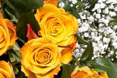 Flor de las almendras Imagen de archivo libre de regalías