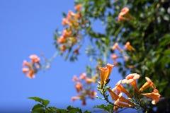 Flor de las flores fotografía de archivo
