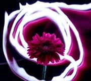 Flor de las líneas de fuego, flor en un fondo de las líneas de fuego, flor de neón Foto de archivo