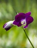 Flor de las orquídeas Fotografía de archivo libre de regalías
