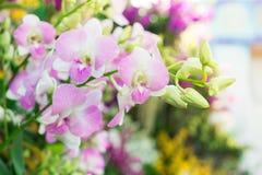 Flor de las orquídeas Fotografía de archivo