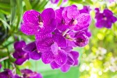 Flor de las orquídeas Imágenes de archivo libres de regalías