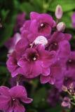 Flor de las orquídeas Imagen de archivo